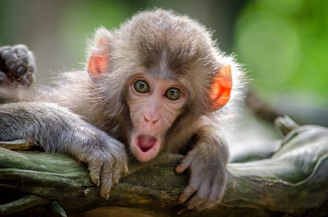 Calming The Monkey Mind With Meditation: How? [Explained]